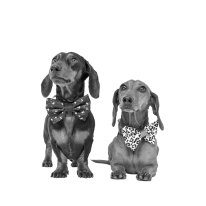 two sausage dogs with bowties