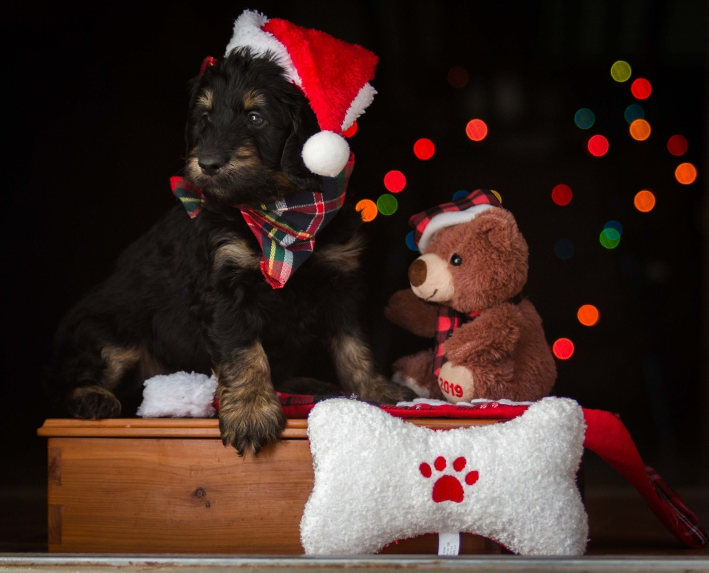 dog in Christmas hat with toy bear and bone