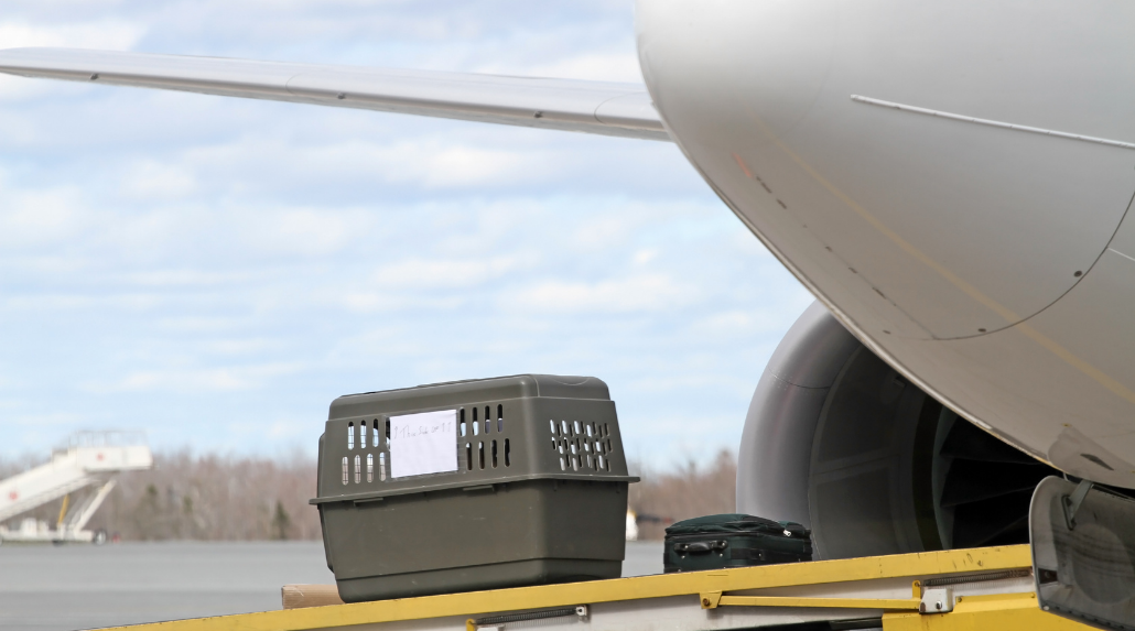 Dog crate being loaded onto aircraft